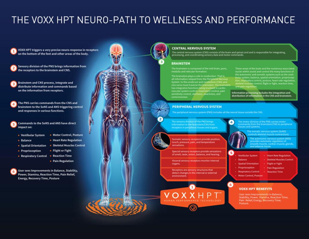 Voxxlife Neuro Path Infographic